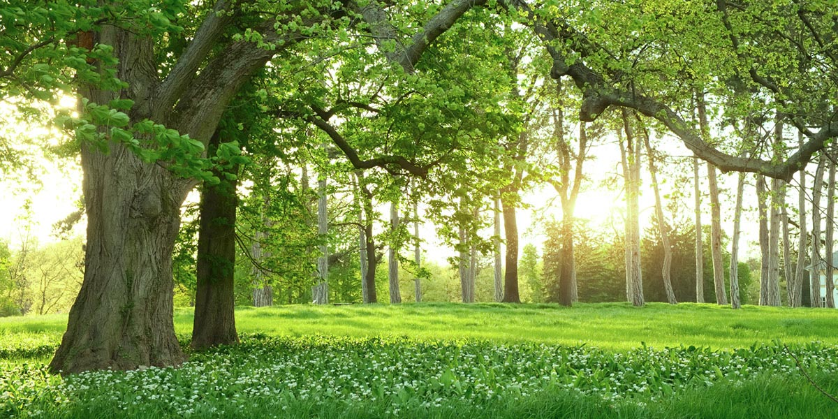 Bäume schonen/CO<sub>2</sub> sparen